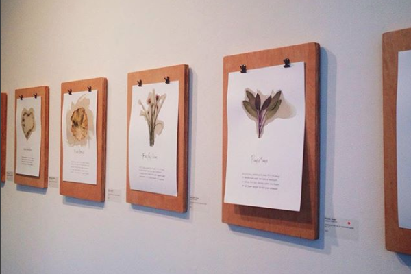 A gallery display of paintings featuring dried herbs, ink, and resin.