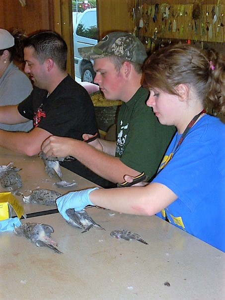 Wildlife Society members working with rodents